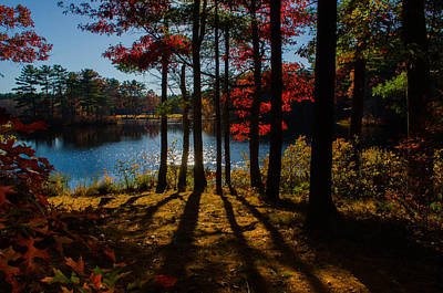 Landscape Photograph - Sun Through The Trees by Linda  Howes