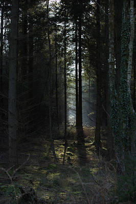 Photograph - Sun Through Trees by Mike Finding