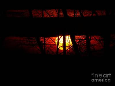 Art Print featuring the photograph Sun Tree by Donald C Morgan