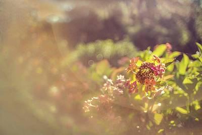 Photograph - Sunbathe Morning by Gene Garnace
