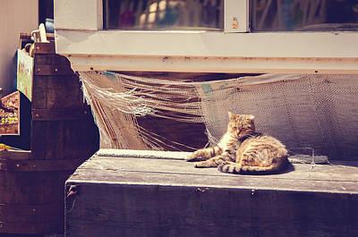 Photograph - Sunbather by Kristy Creighton