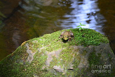 Photograph - Sunbathing Frog by Michelle Welles