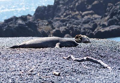 Photograph - Sunbathing Seal by Jeff Swan