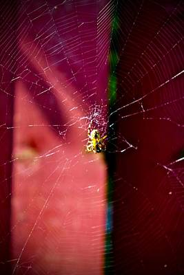 Photograph - Sunbathing Spider by Mario Perron
