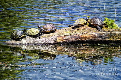 Digital Art - Sunbathing Turtles by Georgianne Giese