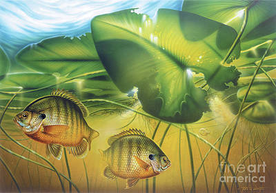 Sunbay Bluegill Art Print by Jon Wright