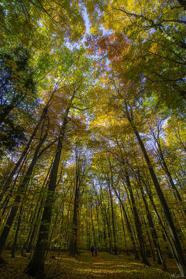 Photograph - Sunbeam Illuminating An Autumn Canopy by Owen Weber