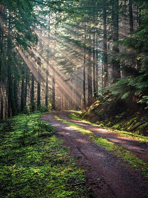Photograph - Sunbeam In Trees Portrait by Jason Brooks