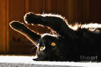 Photograph - Sunbeam Kitty by Betsy Foster Breen