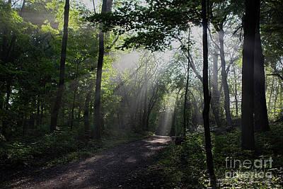 Photograph - Sunbeam Morning Walk by Barbara McMahon