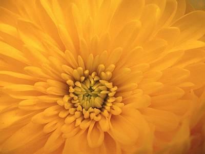 Photograph - Sunbeam by Rhonda Barrett
