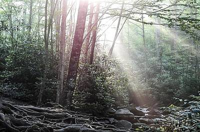 Sunbeam Streaming Into The Forest Art Print