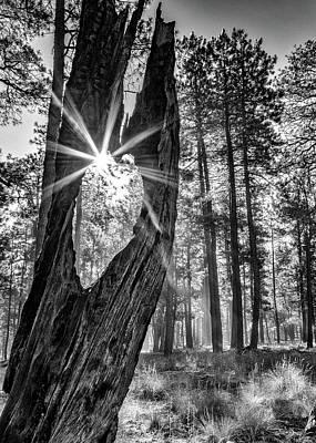 Photograph - Sunbeam Through Old Tree In Forest - Monochrome by Susan Schmitz