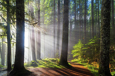 Landscape Photograph - Sunbeams Along Hiking Trails by David Gn