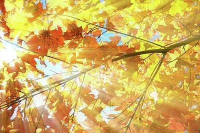 Photograph - Sunbeams And Autumn Leaves by Angie Tirado