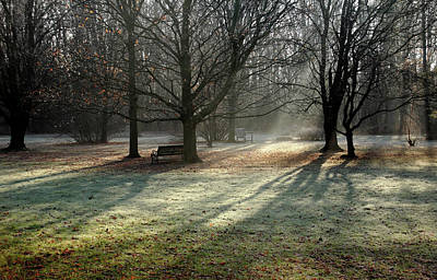 Photograph - Sunbeams And Frost In Fall by Debbie Oppermann