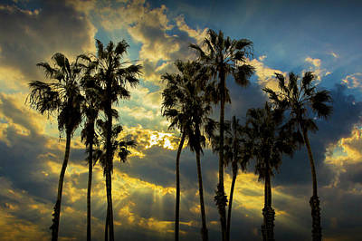 Art Print featuring the photograph Sunbeams And Palm Trees By Cabrillo Beach by Randall Nyhof