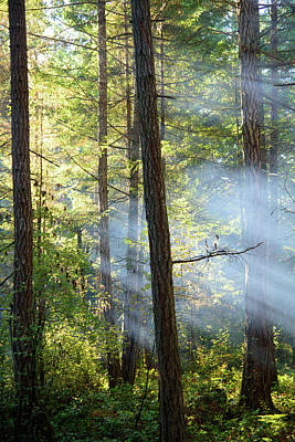 Photograph - Sunbeams In The Forest by Keith Boone