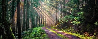 Photograph - Sunbeams In Trees by Jason Brooks