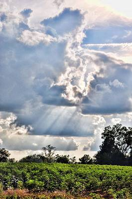 Photograph - Sunbeams On The Cotton Patch by Jan Amiss Photography