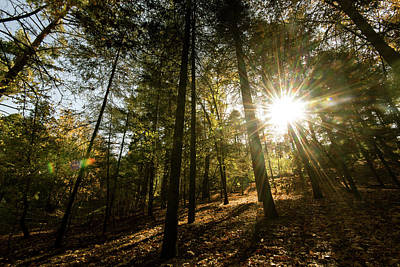 Sunbeams Through  Forest Trees Art Print by Michalakis Ppalis