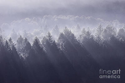 Forest Photograph - Sunbeams by Yuri Santin