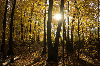 Photograph - Sunburst - An Autumn Walk In The Golden Forest  by Georgia Mizuleva