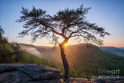 Photograph - Sunburst by Anthony Heflin