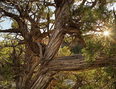 Photograph - Sunburst At Mesa Verde by Kunal Mehra