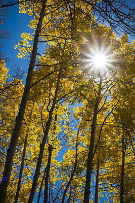 Photograph - Sunburst In Golden Aspen by Mary Lee Dereske