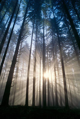 Photograph - Sunburst In The Forest by Greg Vaughn - Printscapes