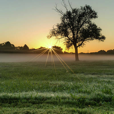 Photograph - Sunburst Sunrise - Single Tree Square Print by Gregory Ballos