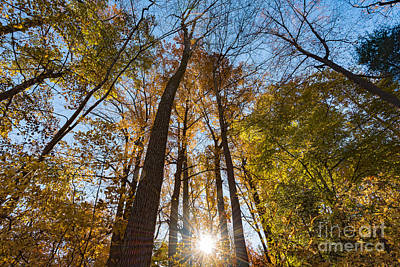 Photograph - Sunburst Through Autumn Trees by Alissa Beth Photography