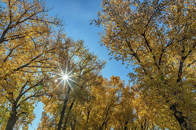 Photograph - Sunburst Through Fall Foliage by Tony Hake