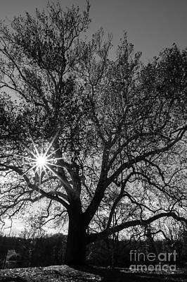 Sunburst Through The Branches Print by David March