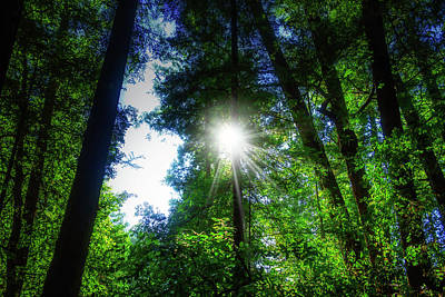 Photograph - Sunburst Through Trees by Garry Gay