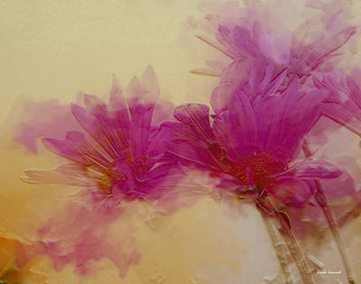 Abstract Flowers Royalty-Free and Rights-Managed Images - Sundance by Linda Sannuti