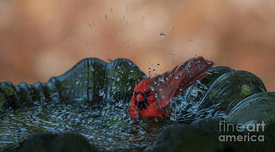 Photograph - Sunday Bath by Dale Powell