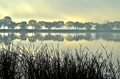 Photograph - Fog At Sunrise by Susie Loechler