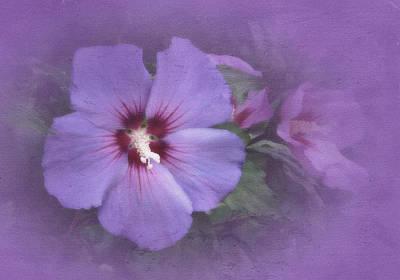 Sunday Hibiscus Art Print