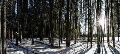Sundial Forest Art Print