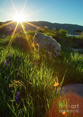 Photograph - Sundown Flower Dog by Todd Breitling