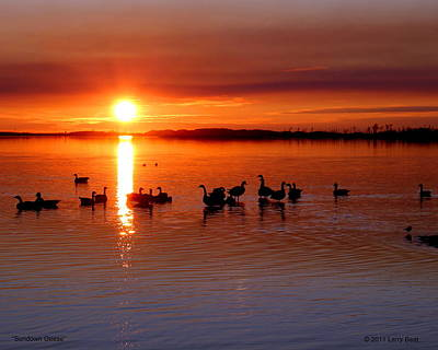 Photograph - Sundown Geese by Larry Beat