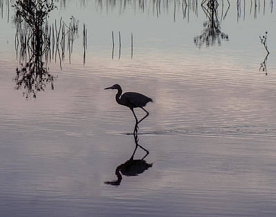 Sundown Heron Silhouette Art Print