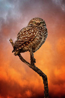 Photograph - Sundown Owl by Wes and Dotty Weber