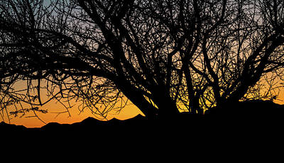 Photograph - Sundown Silhouette by Bonnie Follett