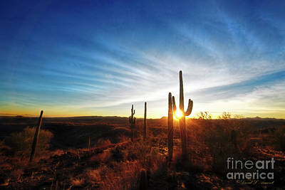 Photograph - Sundown Through Cactus by David Arment