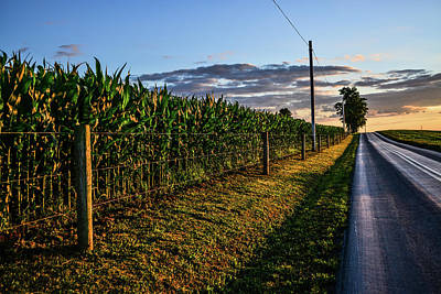 Photograph - Sundrenched Cornfield by Tana Reiff