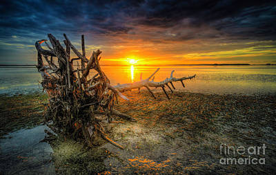 Driftwood Wall Art - Photograph - Sundrift by Marvin Spates