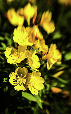 Photograph - Sundrops by Onyonet  Photo Studios